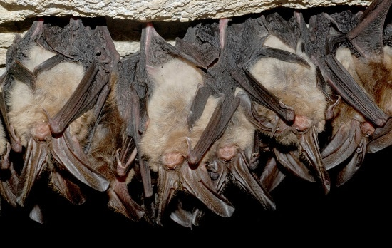 Pest control for bats in Altoona