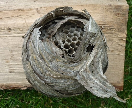 Wasp nest, hornet and bee removal